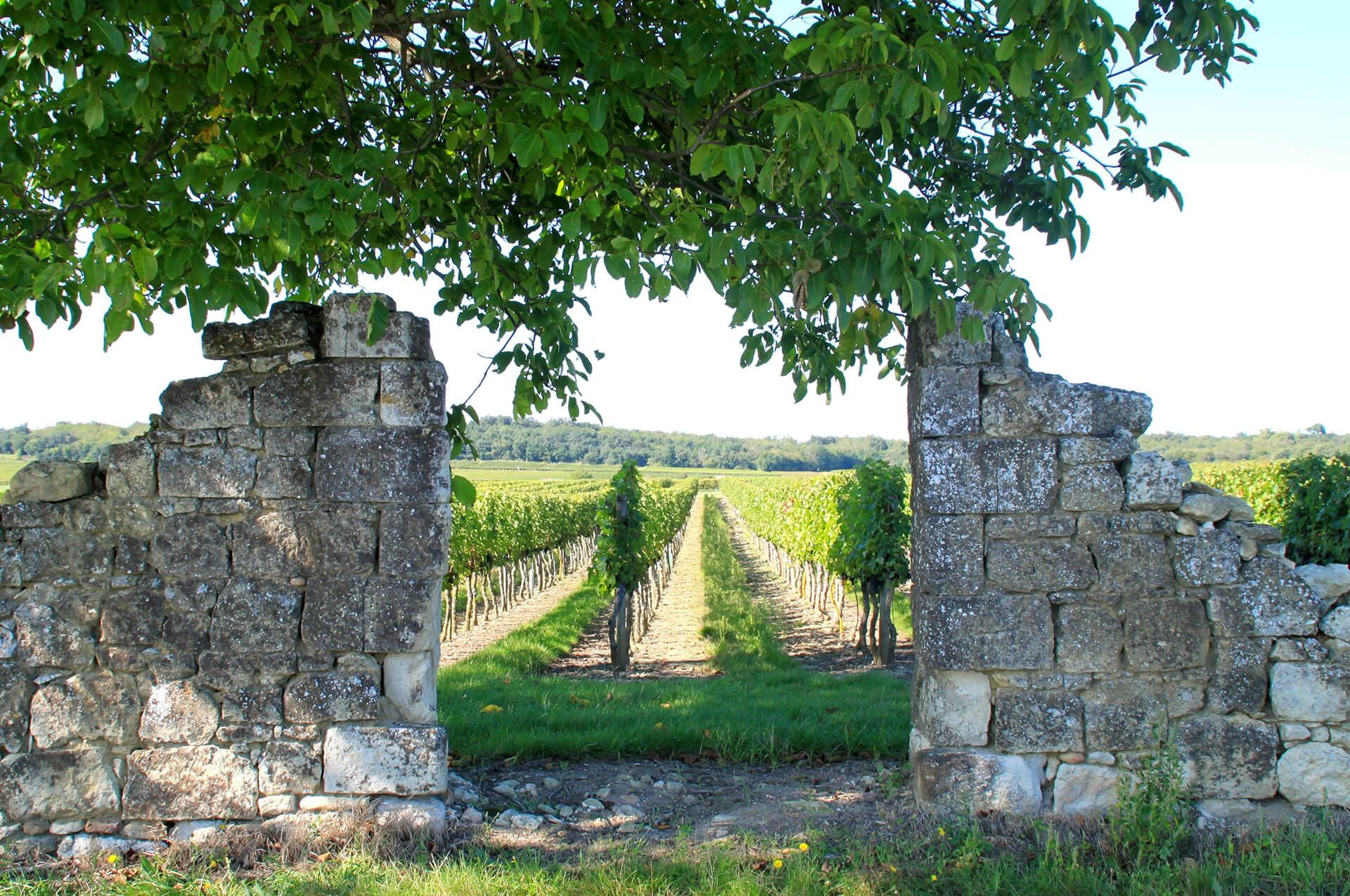 Vignoble Saumurois © Séverine Rochelet