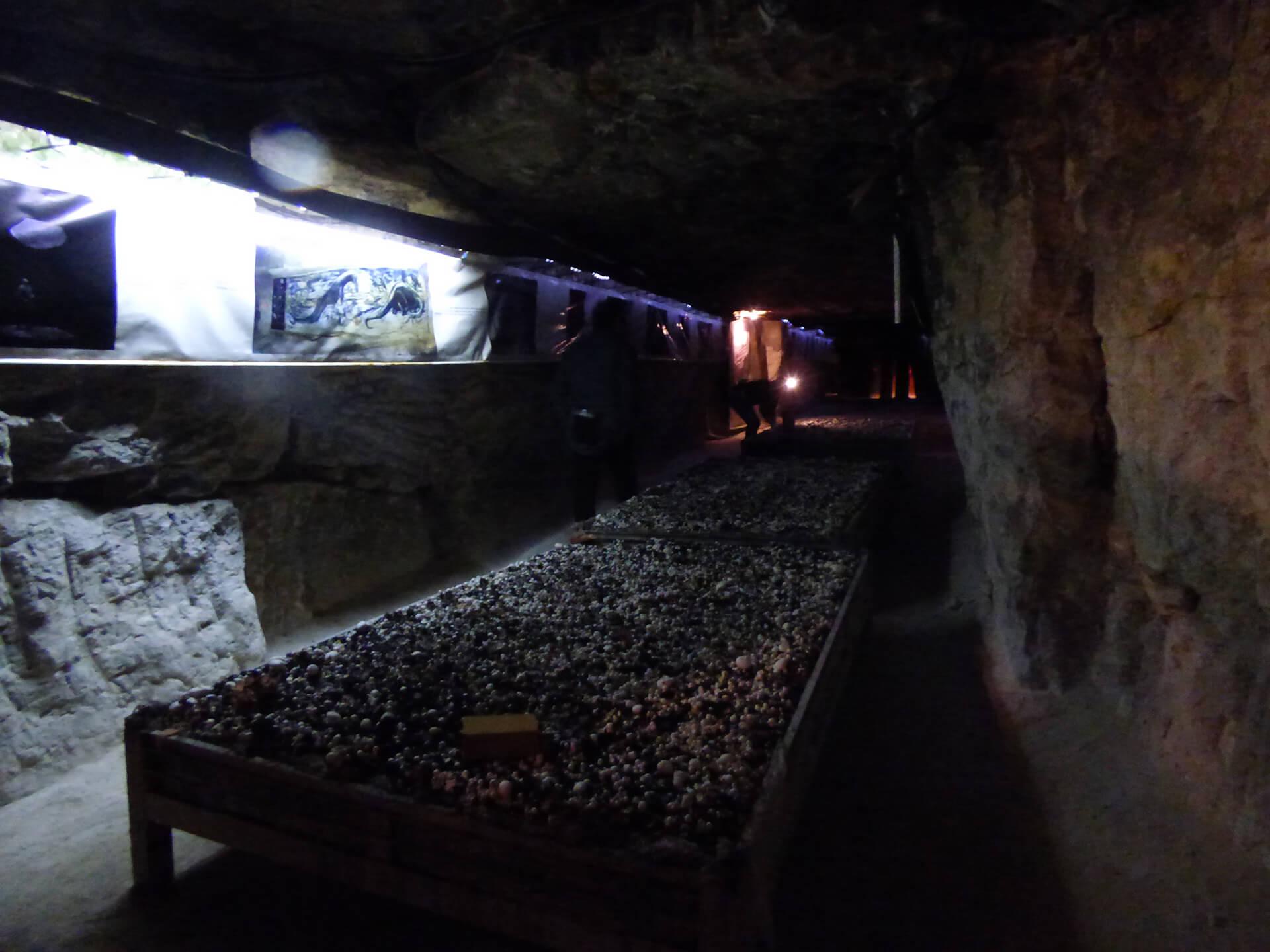 cave-champignon (3)