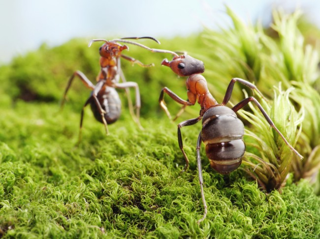 Micropolis, La cité des insectes à Saint-Léons