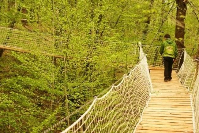 Wizz'Titi, Course d'orientation parcours aventure dans les arbres accrobranche-obstacle-enfant-adulte-famille-sortie-detente-correze-proche-brives-la-gaillarde-orientation-parcours-aventure-arbre-sentier-wizztiti