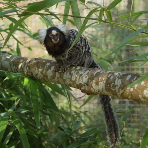 Domaine Zoologique de Pescheray zoo-animaux-parc-animalier-foret-visite-enfant-famille-domaine-zoologique-de-pescheray-le breil-sur-merize-le-mans-sarthe-pays-de-la-loire