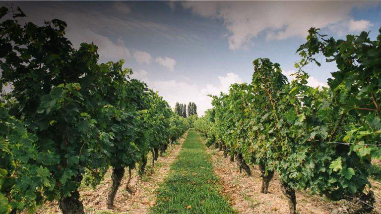 Dégustation au domaine de Noiré vigneron BIO à Chinon degustation-au-domaine-de-noire-vigneron-bio-chinon-touraine-vin-biologique-cave-visite-oenotourisme-caleche-vigneron-viticulteur-raisin-cepage-terroir Domaine_de_Noire_accueil_sl-degustation-au-domaine-de-noire-vigneron-bio-chinon-touraine-vin-biologique-cave-visite-oenotourisme-caleche-vigneron-viticulteur-raisin-cepage-terroir