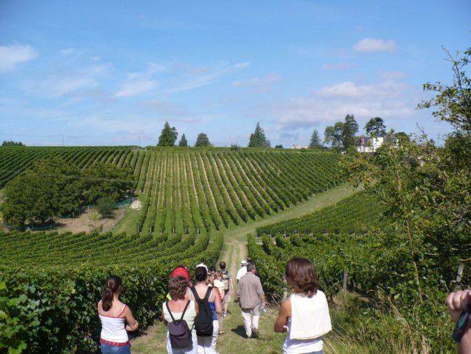 Vignes vins et Randos Dégustation au domaine de Noiré vigneron BIO à Chinon degustation-au-domaine-de-noire-vigneron-bio-chinon-touraine-vin-biologique-cave-visite-oenotourisme-caleche-vigneron-viticulteur-raisin-cepage-terroir jean-max-odile-degustation-au-domaine-de-noire-vigneron-bio-chinon-touraine-vin-biologique-cave-visite-oenotourisme-caleche-vigneron-viticulteur-raisin-cepage-terroir