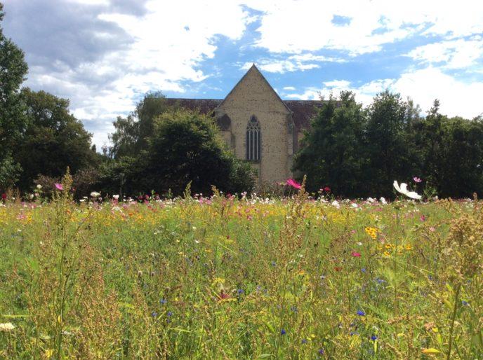 jachère fleurie Abbaye-de-l-Epau-Le-Mans Visite historique de l'Abbaye Royale de l'Epau au Mans visite-historique-abbaye-royale-epau-mans-monument-cystercien-cystercienne-moine-yvre-eveque-sarthe-pays-de-la-loire